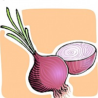 Free Onion Illustration