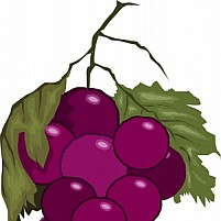 Free Bunches Of Grapes Illustration