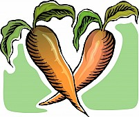 Free carrot	 Illustration