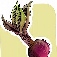 Free beetroot Illustration