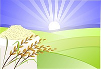 Free Paddy And Nice Illustration