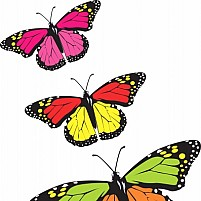 Free Butterfly Illustration