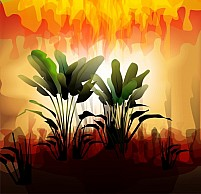 Free Beauty of plant on sunset Illustration